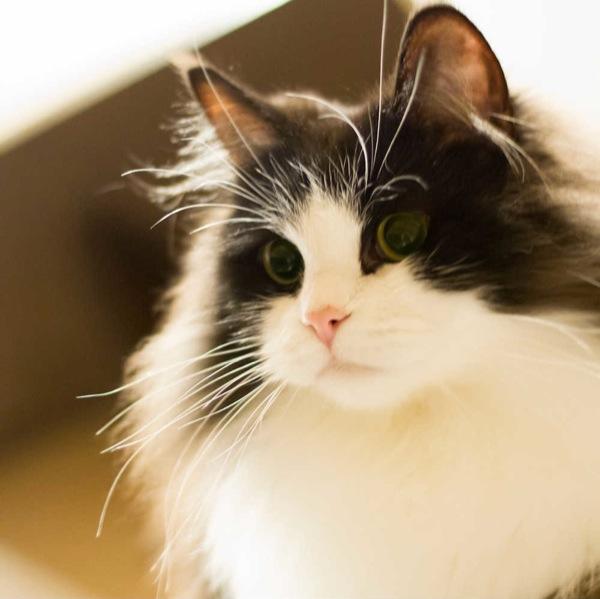 cat(4)