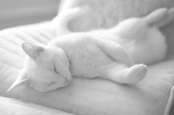 cat(5)