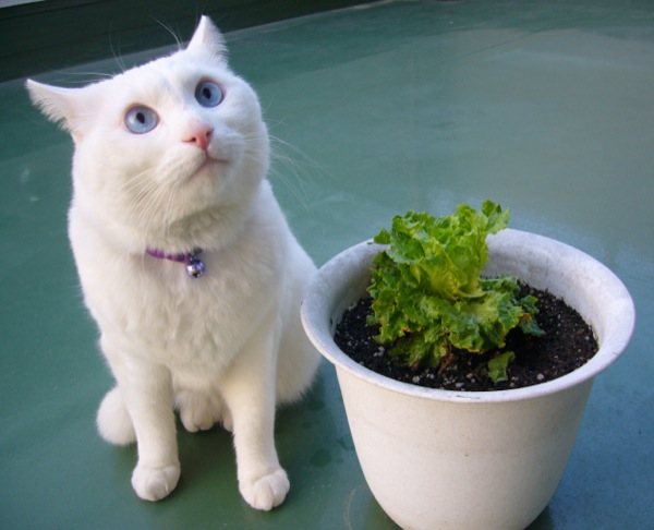 cat(6)
