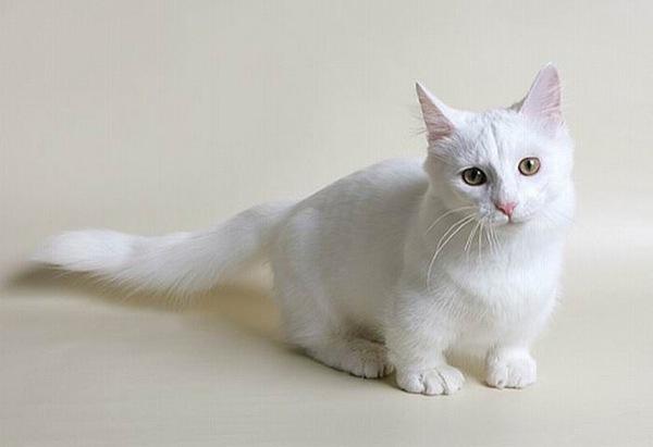 cat(7)
