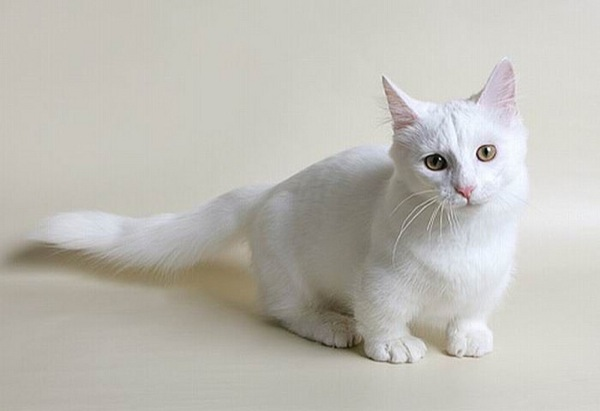 cat71.jpg