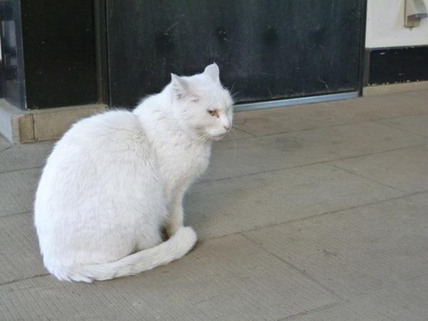 cat(8)