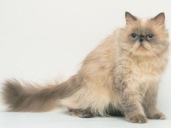 cat(9)