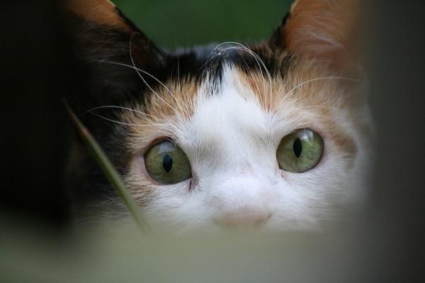 これはヤバい!おもしろ猫画像20選☆