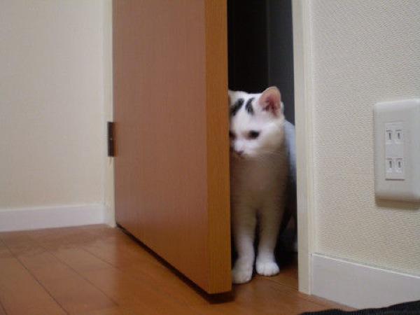 イケてる猫たちの、おもしろ画像22選!!