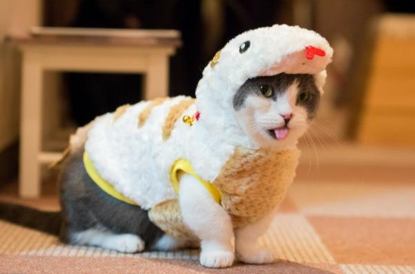 猫カフェ22