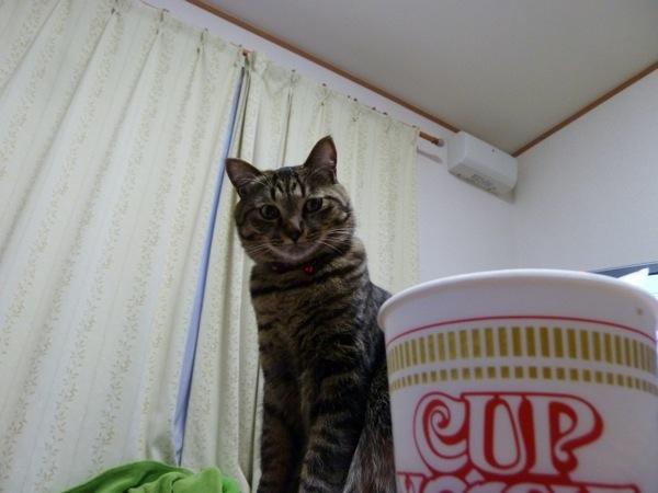猫の気持ち2