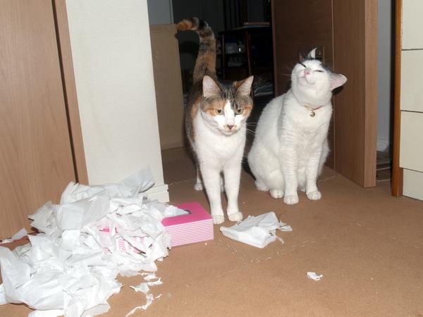 見ているだけで猫の気持ちが伝わってくる、ほんわか猫画像22選!!