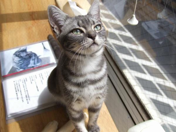 猫カフェ19