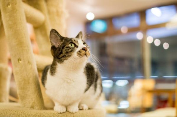 猫カフェでまったり、くつろぐ、ほんわか猫画像22選!!