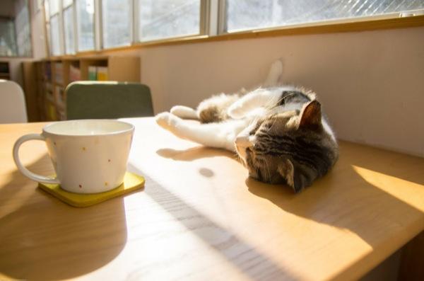 猫カフェ10