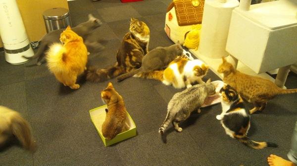 猫カフェ11
