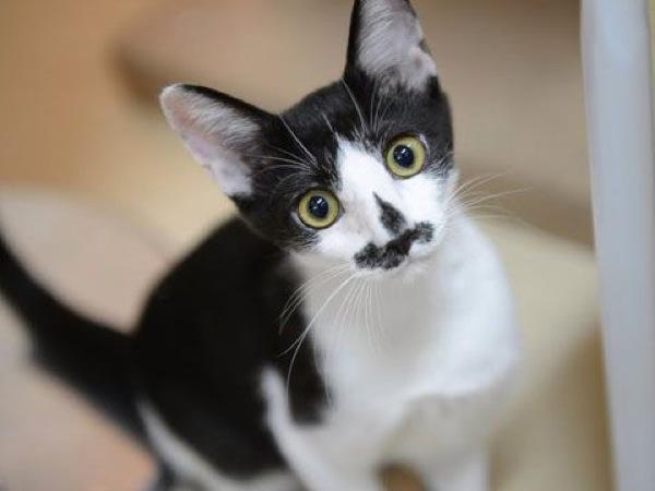 この猫の里親になりたいと思う、めちゃ可愛い子猫画像22選!!