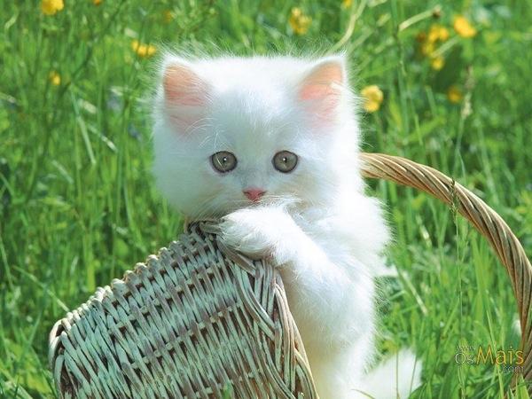 抱きしめたくなるくらい、かわいい猫画像22選☆