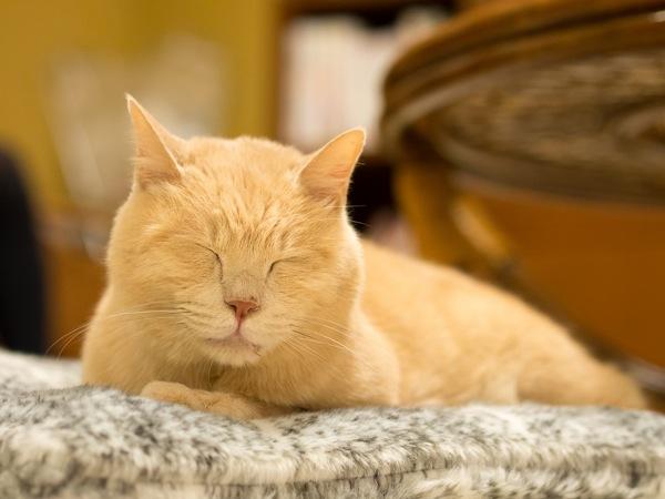 猫カフェ20