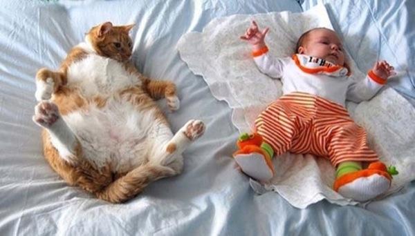 猫の種類がよくわかる・おもしろ猫画像22選!!