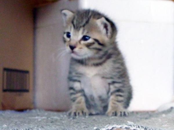 この猫の里親になれたら、幸せな子猫画像22選!!