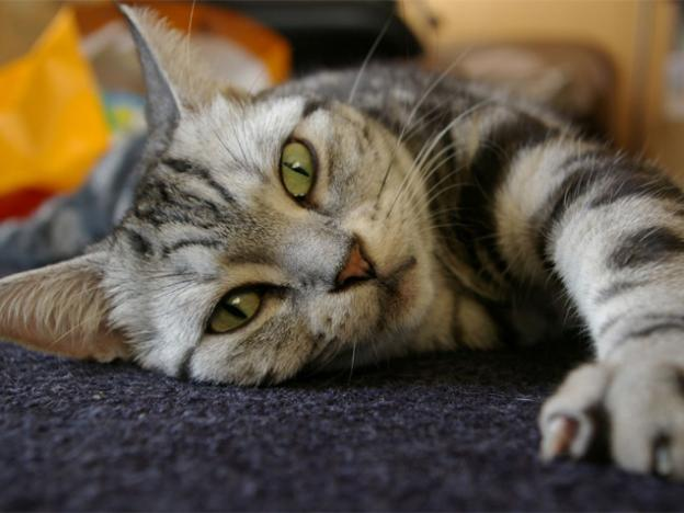 つらい猫アレルギーと上手に付き合う3つの方法