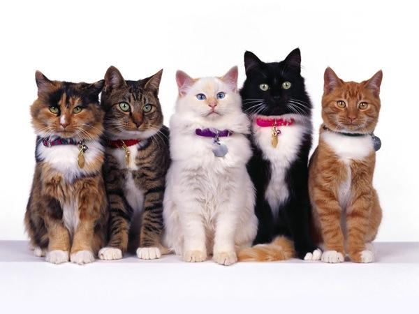 あって良かった!あなたの猫に首輪が必要な5つの理由