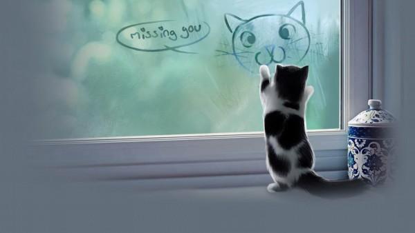 猫の画像で癒し効果が超~高いものだけ厳選17つ☆