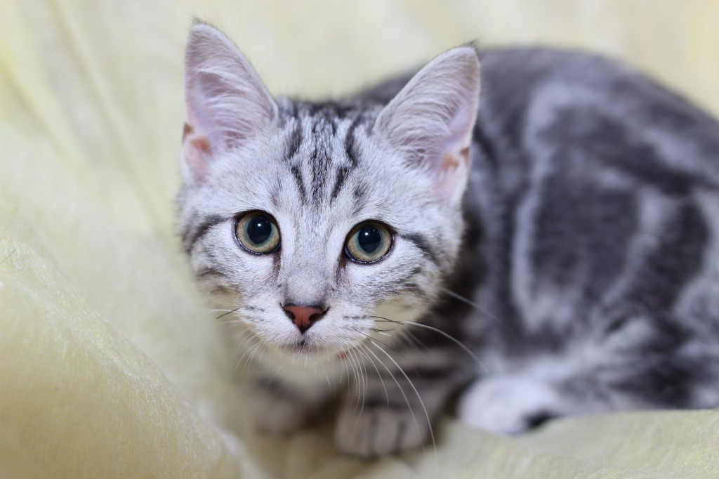 猫をゲージにいれて飼うことの、7つの意外なメリット