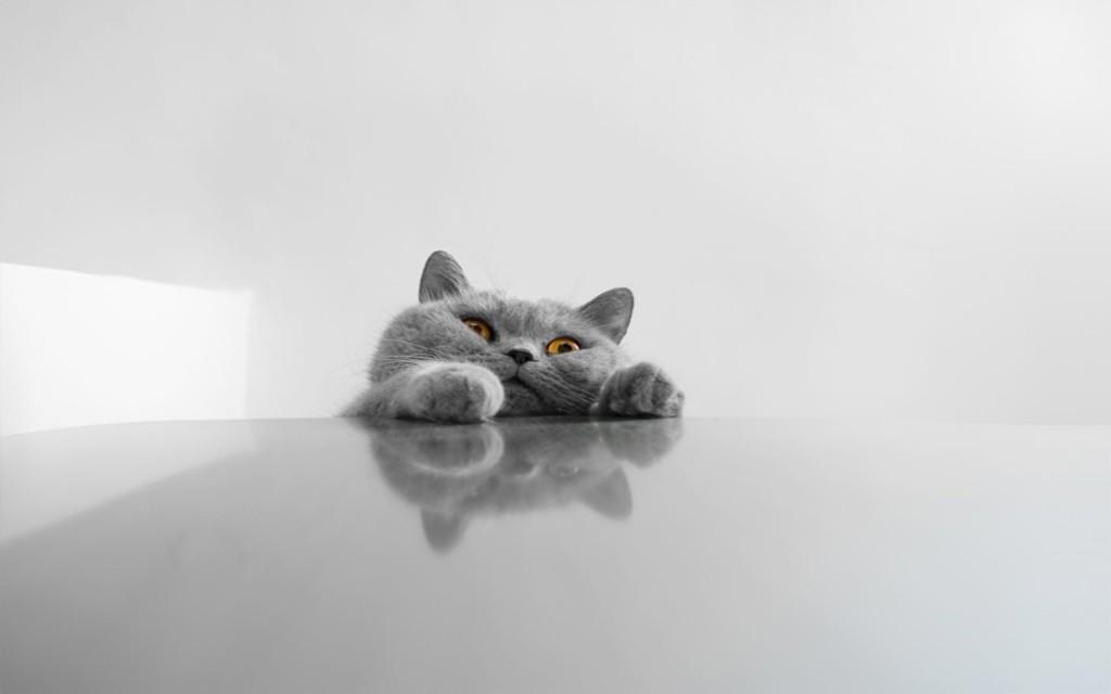 猫のこんなところあんなところおもしろ画像11選