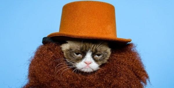 猫のコスプレをするときに可愛く見せる7つのポイント
