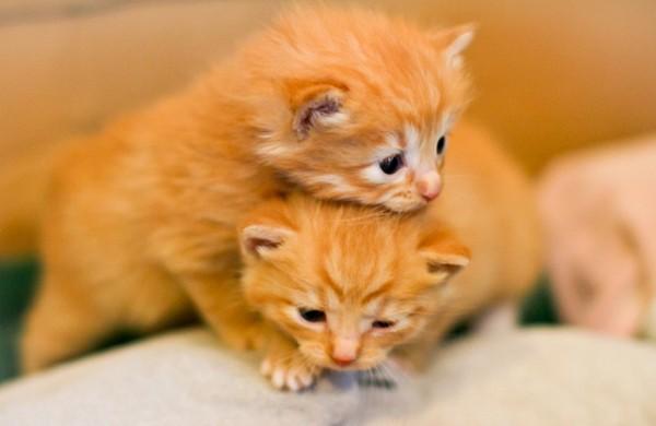 猫を癒しにしたい人が知っておくべき7つの接し方