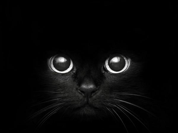 黒猫マニア必見!画像に綺麗に残すための7つのコツ