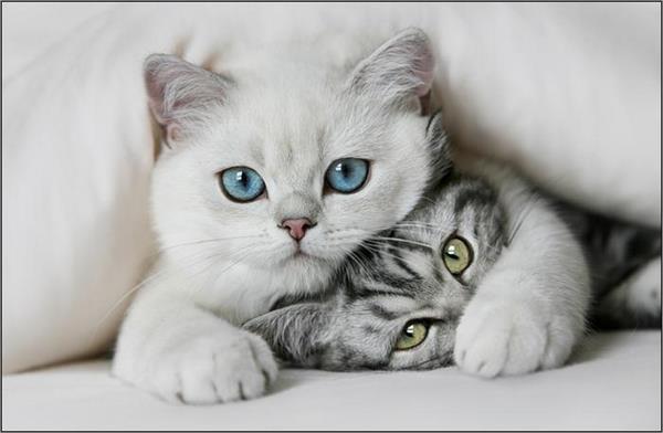 猫好きなら必ず共感する、猫のかわいい7つのしぐさ