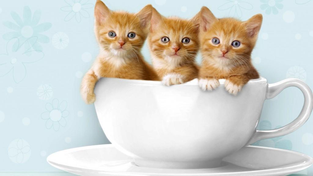猫カフェ、京都・大阪で行くなら絶対オススメ店舗10選♪
