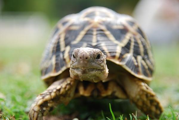 亀の飼い方で知っておきたい、病気に対する7つの対処法