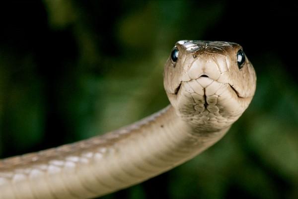 蛇をペットに考え中の人が知っておくべき 7つの注意点