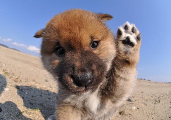 動いている子犬の画像を上手に撮る5つの方法