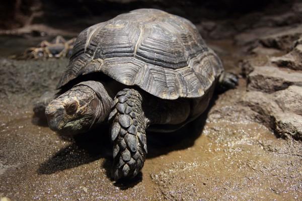 亀の飼い方で知っておくべき 7つの基本事項