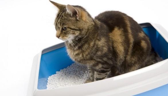 猫の便秘がなかなか解消されない時に見直す7つの飼育方法
