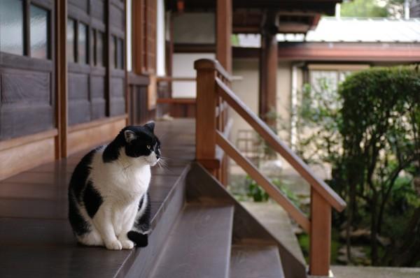 新しい猫カフェがいっぱいある京都・大阪の7つの楽しみ方