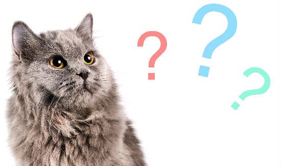 猫の鳴き声の共通点を知って意味を理解する7つの方法