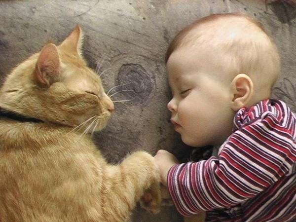 赤ちゃんがいるお家での猫の飼い方の7つの注意点