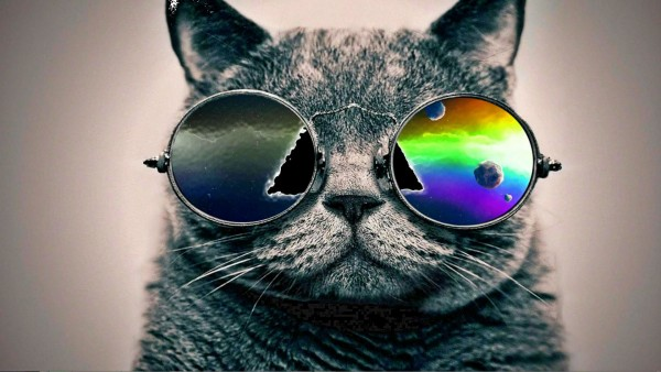 今日も一日元気になれる、猫のおもしろ画像11連発