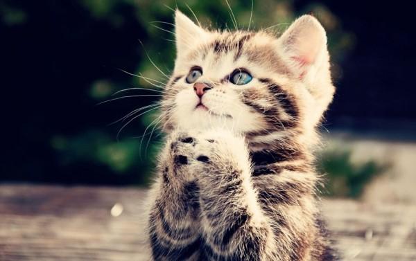 とろける★萌える★とびっきりキュートな子猫の画像11選