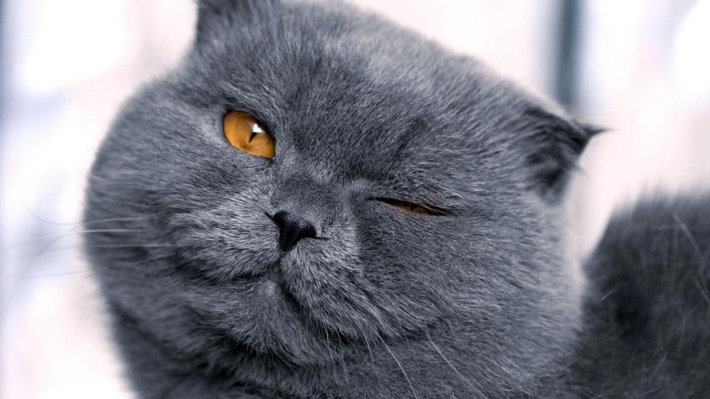 猫嫌いな人に見てもらいたい意外なおもしろ猫画像11つ