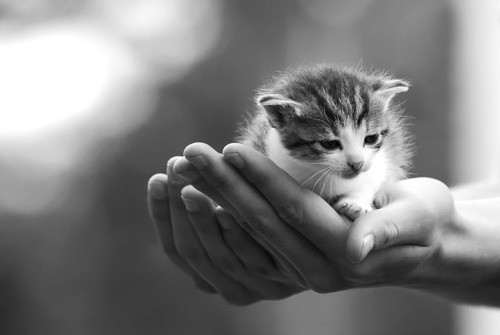 猫好きのためだけに集めた萌える猫画像11選