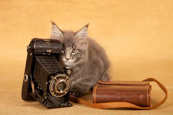 猫の面白画像をとるために準備しておきたい7つの道具