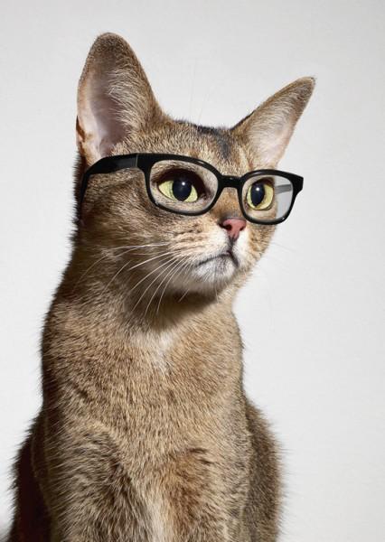 猫の賢さを存分に引き出せる、7つのしつけ術♪
