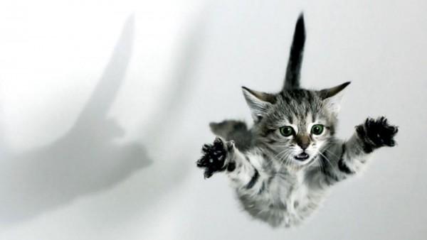 おもしろ猫画像を集めたお腹がよじれる猫11選