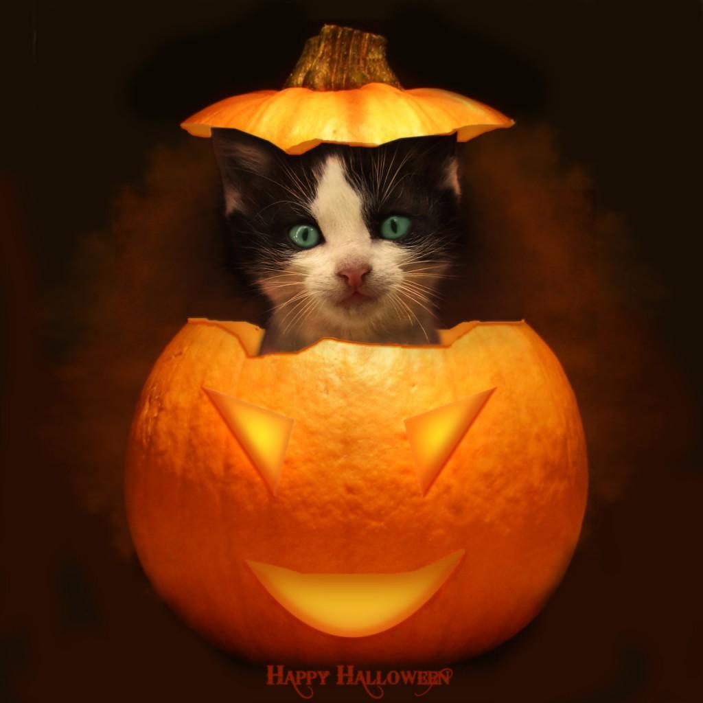 ハロウィンではずせない猫のコスプレ人気コーデ11選