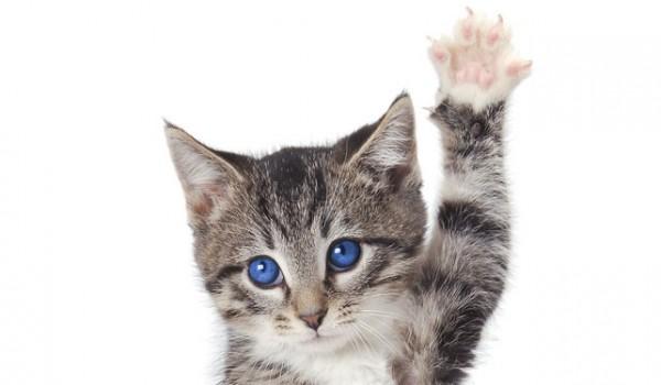 猫をしつけるときにとっても重要な7つのポイント