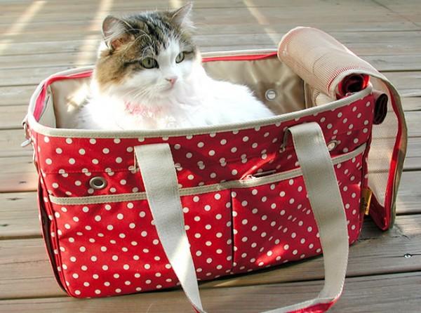 愛猫を外に連れて行くときに注意したい7つのこと