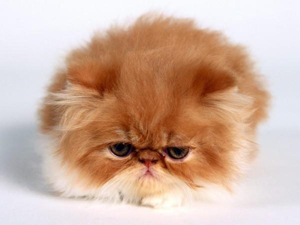 可愛いけど超笑える!子猫の画像、厳選11選☆